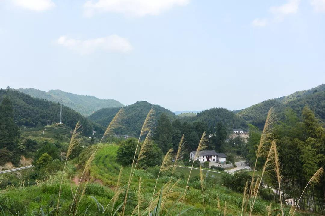神山村全景
